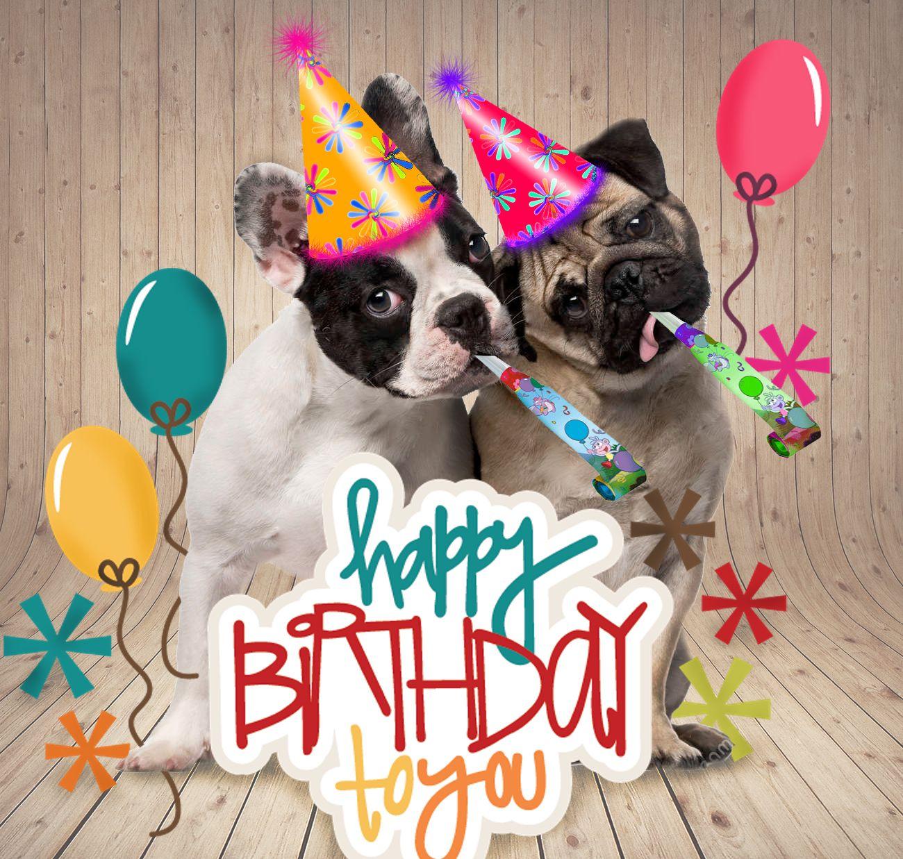 French Bull Dog Pug Friends Birthday Card Funny Stuff