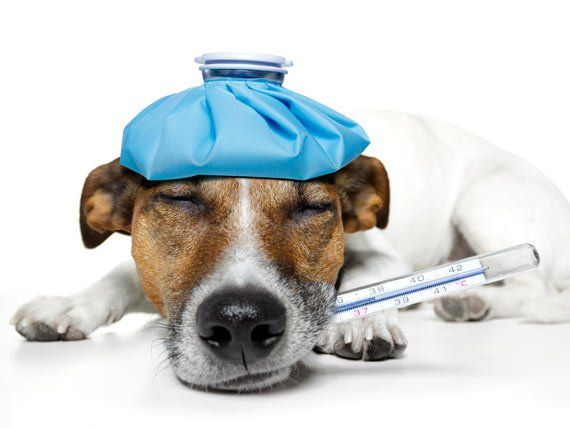 What is the best pain medication for dogs? | petMD