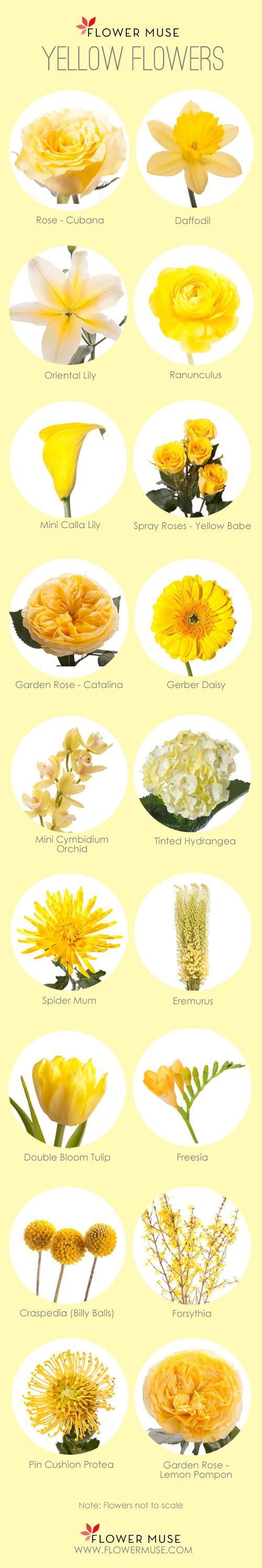 Fiori Gialli Yellow Flowers.Our Favorite Yellow Flowers Fiori Per Matrimoni Fiori Gialli E
