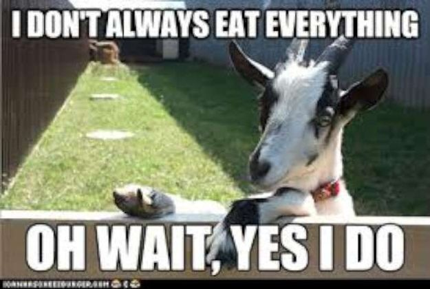 Goat Quotes Impressive Community Post 48 Goat Quotes For Every Occasion Hahahahaha
