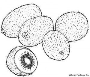 Fruits Coloring Page Coloring Pages Fabric Painting