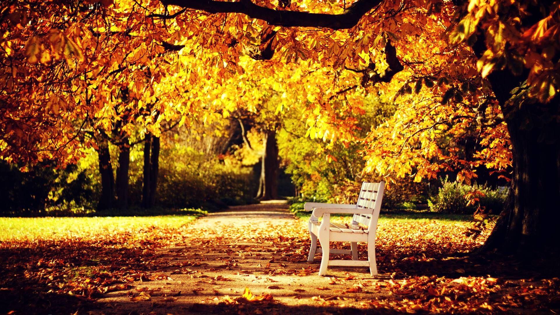 Autumn Wallpaper Fall HD Backgrounds 1680×1050 Autumn Pics