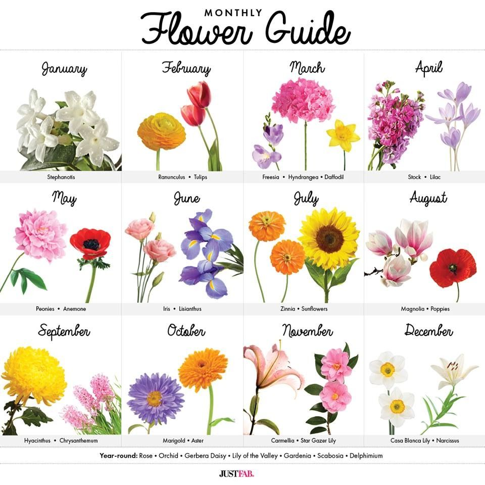 Monthly Flower Guide (With images) Birth flowers, Birth