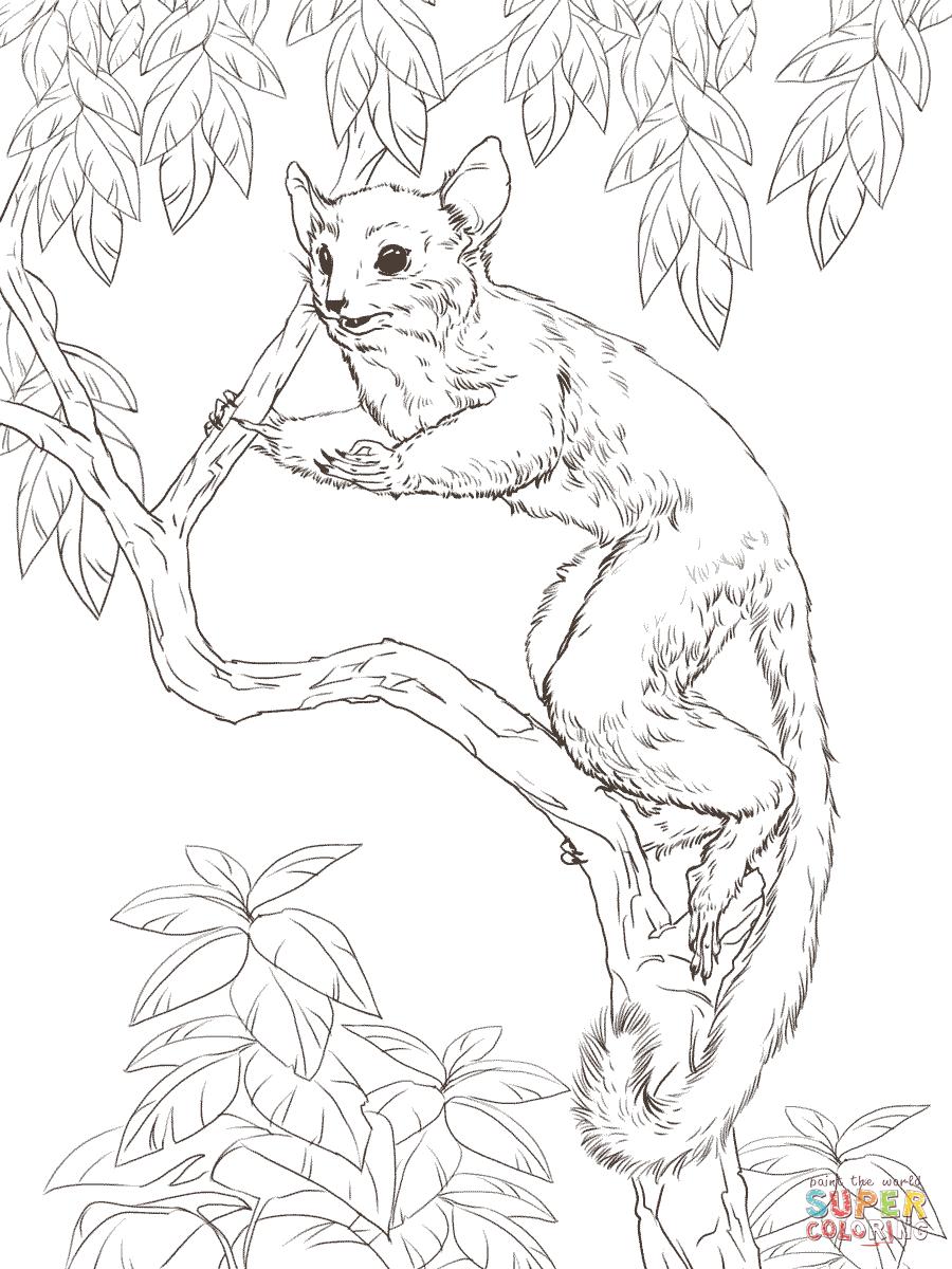 senegal-bushbaby-coloring-pages.png (900×1200) | Рисование эскизов ...