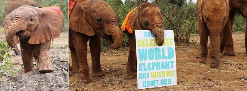 Sponsor an orphan. The David Sheldrick Wildlife Trust. DSWT.org *~❤•❦•:*´`*:•❦•❤~*