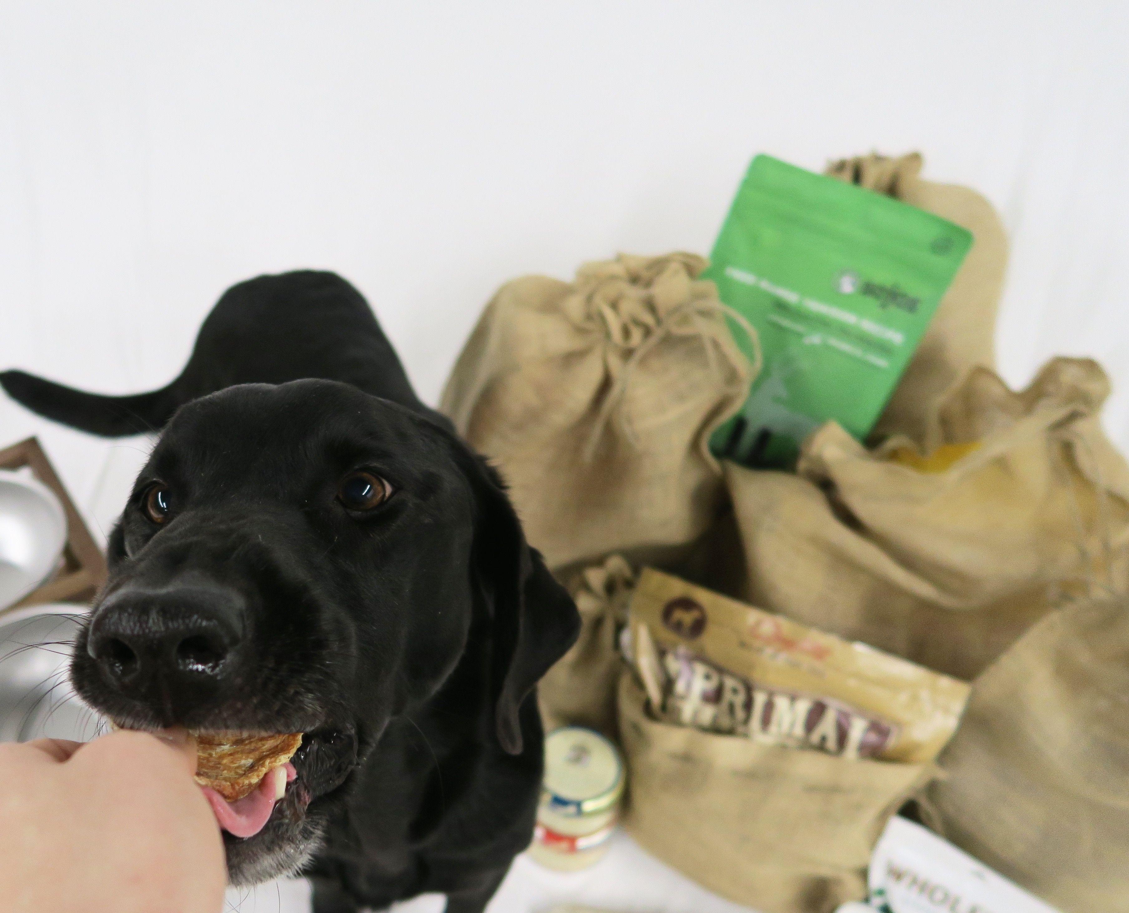 primalpet sojospetfood Animal companions, Pets, Animals