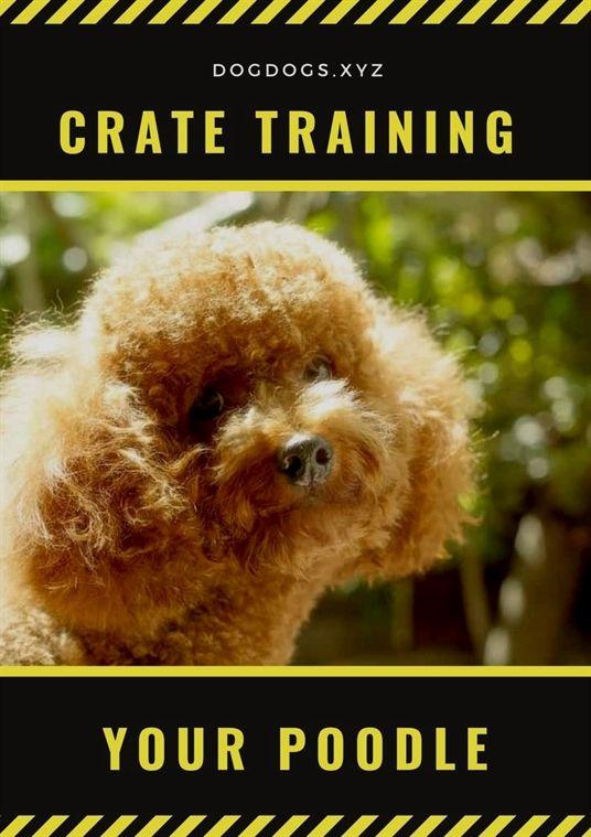 Dog Training With Electronic Collar Dog Training Zachary Dog