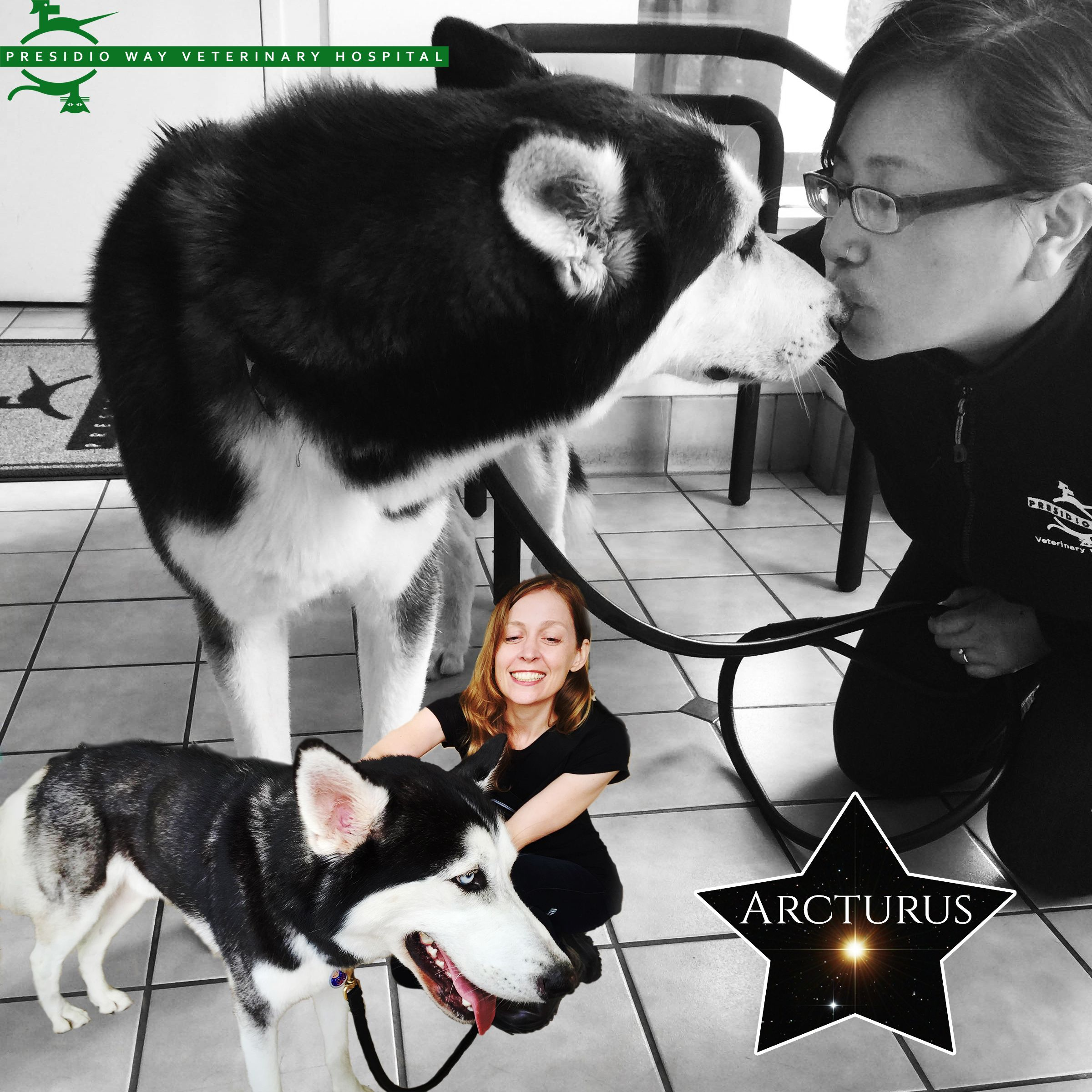 We Had The Pleasure Of Meeting This Sweet And Mellow Husky Over The Weekend Owner Natalie Seen Here Recently Adopt Husky Rescue Veterinary Hospital A Husky