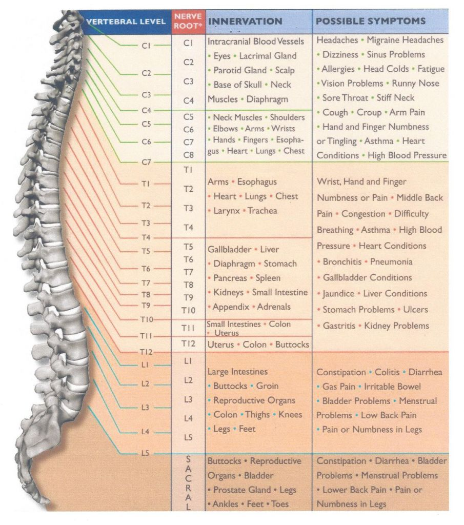 cervical spinal nerves chart & cervical spinal nerves medical ...