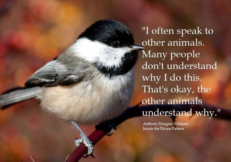 """I often speak to other animals. Many people don't understand why I do this. That's okay, the other animals understand why."""