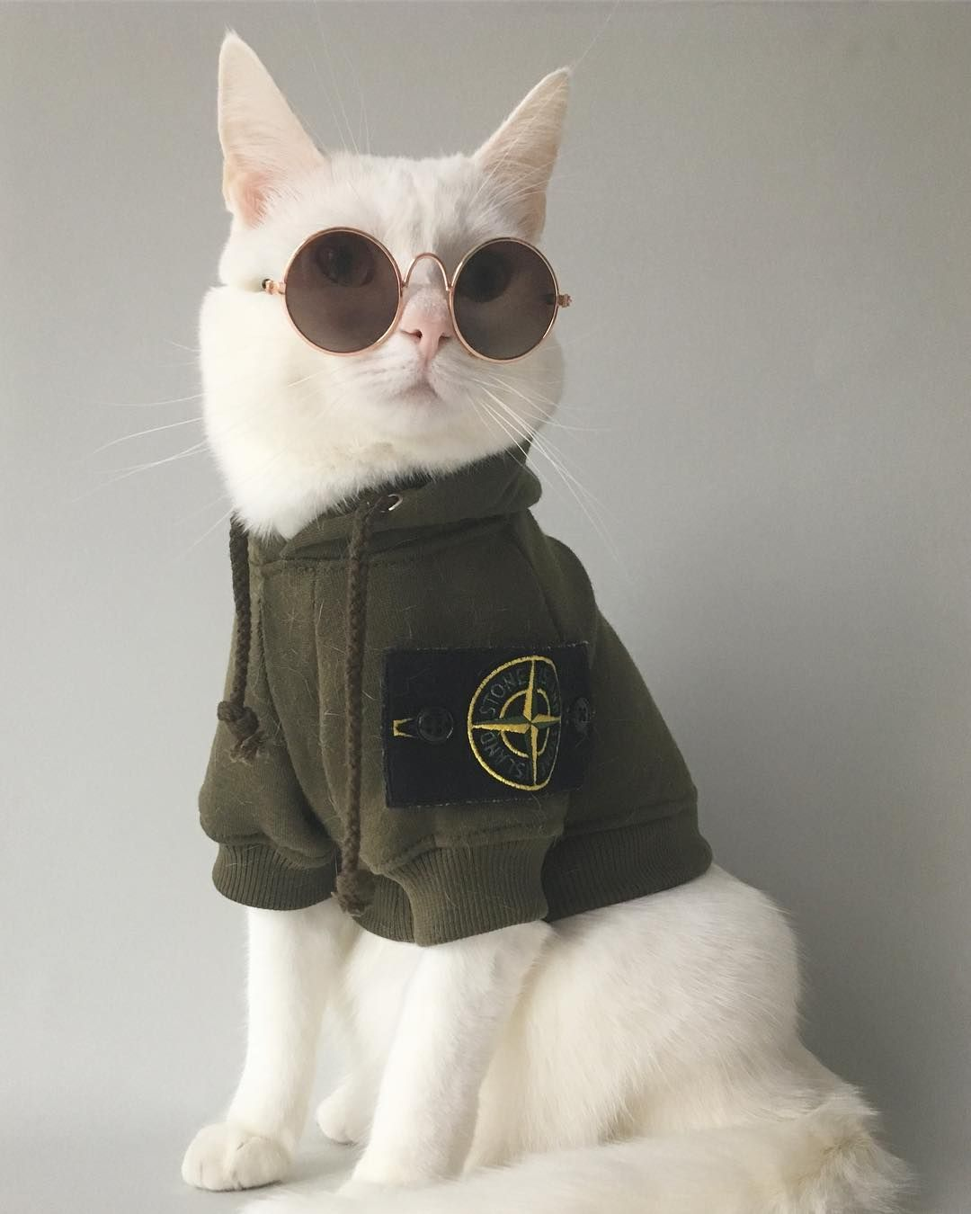 Zappa The Cat Fashion Is My Middle Name Cat Outfits Pets Cute Cats Cats