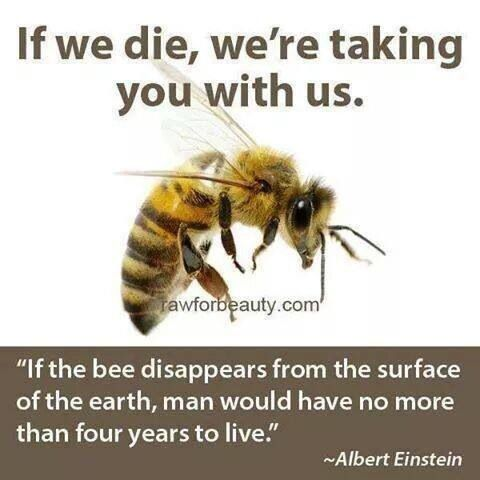 Did U Know What Will Happen If Bees Go Extinct Bee Save