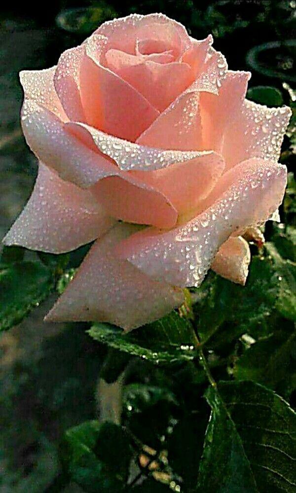 สวยงามท สวยงาม Flores Raras Y Exotlcas