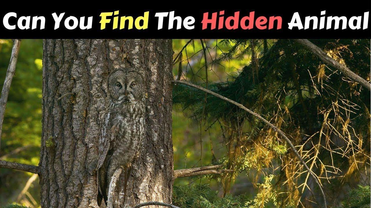 optical illusions find cat # 83