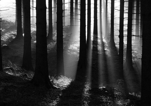 Beautiful Black And White Forest Light Nature Favim Com 449162 Jpg 500 351 Black And White Forest Forest Light