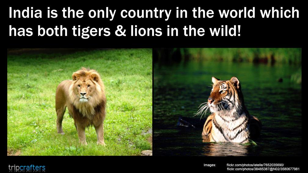 DidYouKnow India ॐ Wildlife sanctuary, Tiger images