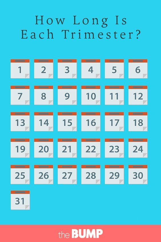 How Long Is Each Trimester? | Trimester