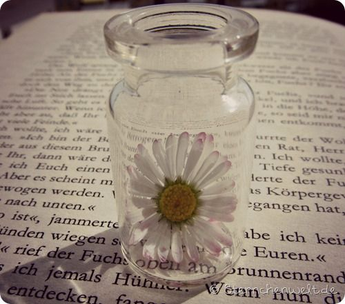 Daisy in a jar