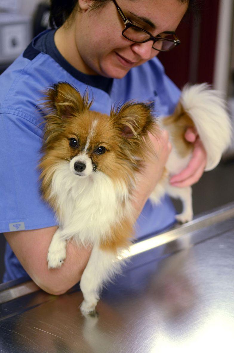 Apcc Toxin Exposure Triage Sheet Veterinary Medicine Pets Veterinary Technician