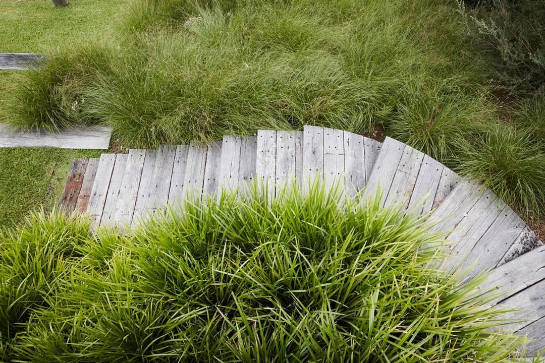 An Overhead View Of Stairs At Our Callala Bay Project A Large Amount Of Native Grasses Were Planted Clustered Tightly Together To Create A Plants Grass Stairs