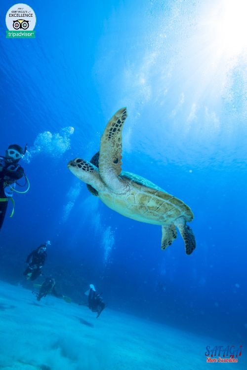 Scuba Diving From Safaga Port (avec Images)