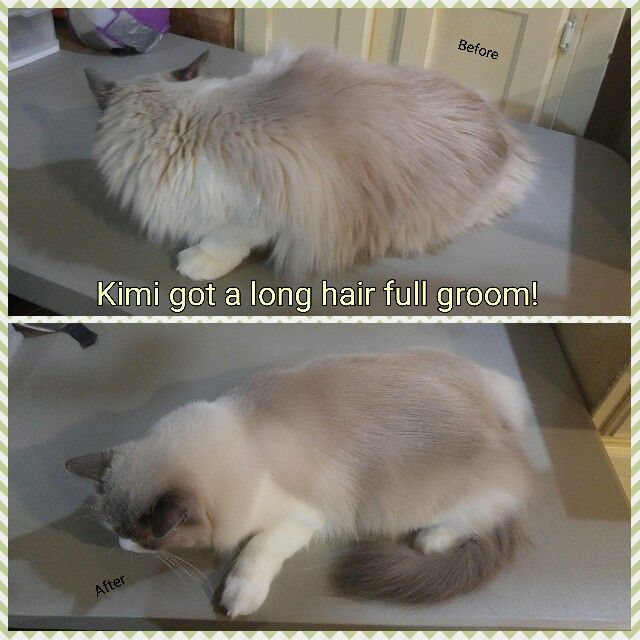 Pin by DREAMING BIG Cat Grooming on Cat Grooming Images