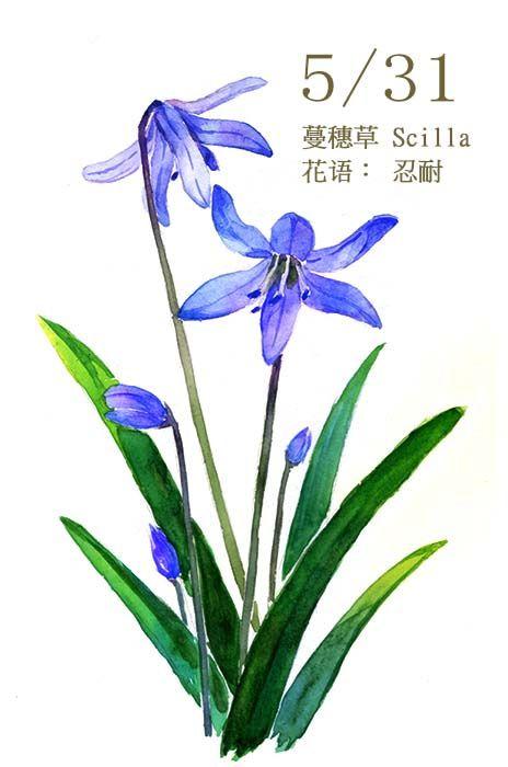 5月31日 蔓穗草 Scil Haru Hello Flower Drawing Water Color Markers Floral Watercolor