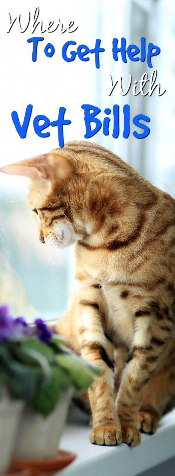 Help With Vet Bill Affordability Vet bills, Vets, Cat