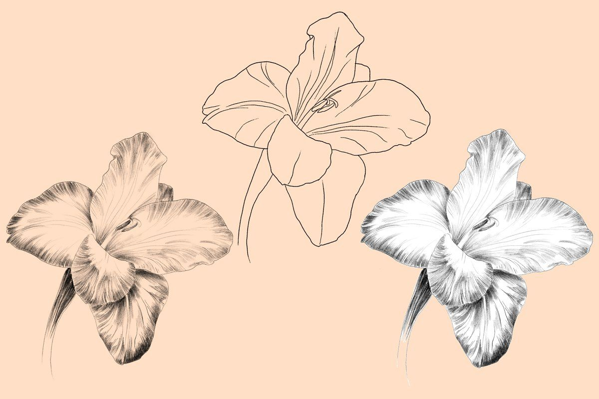 Blooming Flowers Gladiolus Flower Tattoos Gladiolus Flower Flower Drawing