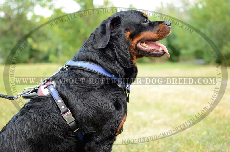 Practical American Flag Leather Rottweiler Harness 159 00