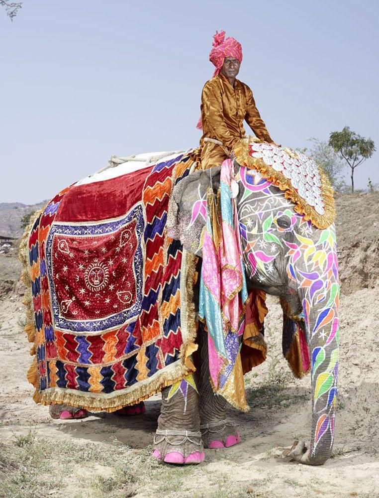 20 éléphants parés de mille couleurs pour le Festival Jaipur célébré en leur honneur