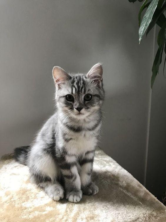 Photo of 100 Fotos die beweisen dass Katzen das süßeste Tier der Welt sind  KUROO