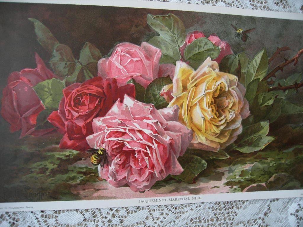 A Still Life with Roses Stampa su Tela Vernice Effetto Pennellate De Longpre
