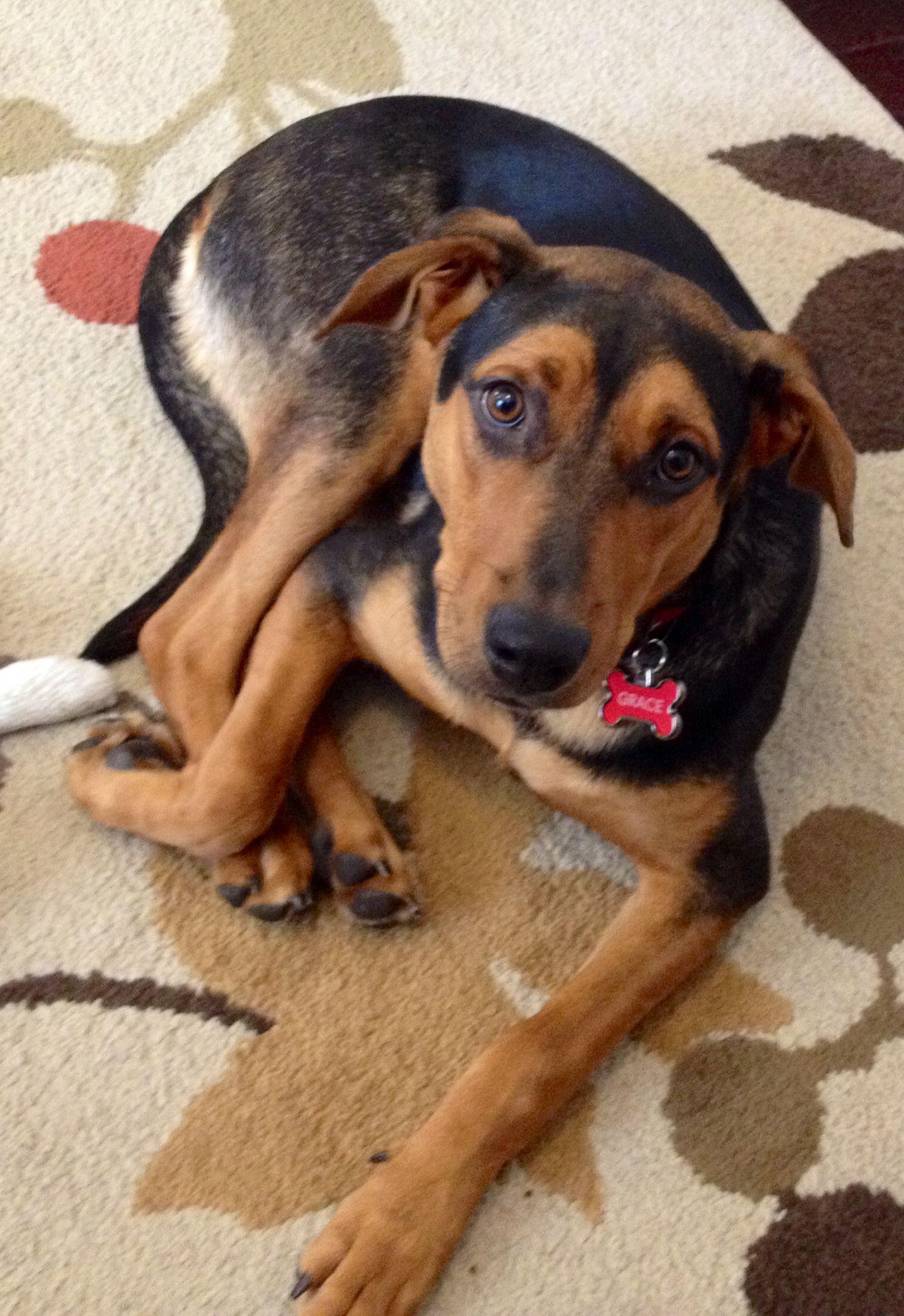 GraceAdopted!. Doberman mix, Beautiful dogs, Crate training
