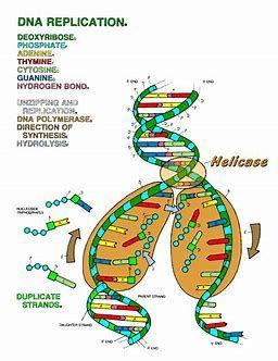 Image result for the biology coloring book pdf | Dna ...