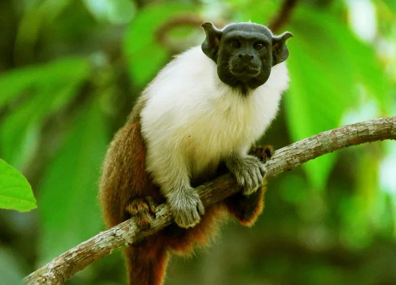 Fotos De Animales Feos Busqueda De Google En 2020 Animales Feos Fotos De Animales Animales