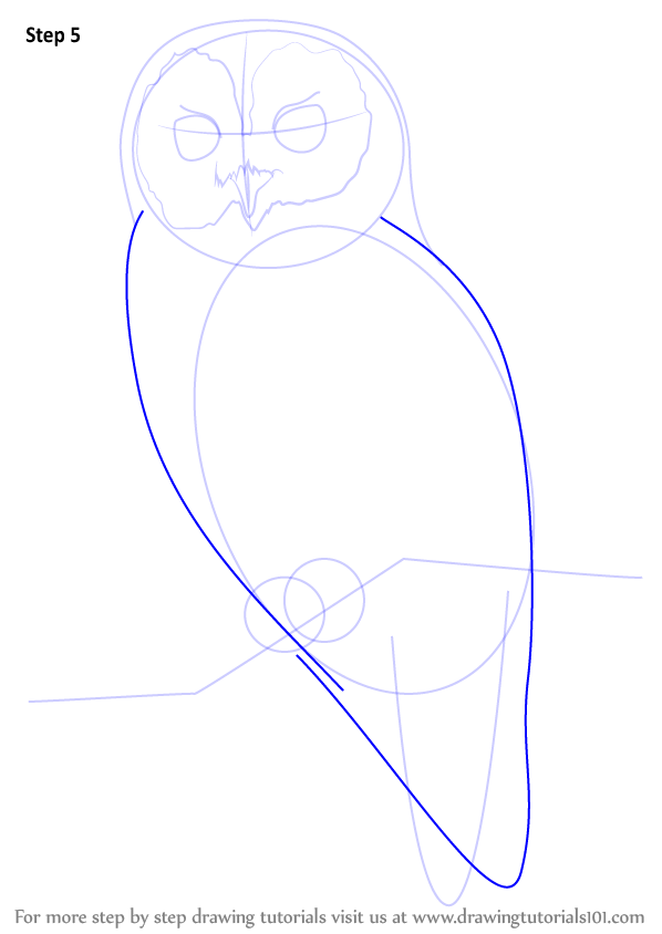 how to draw a elf owl step by step