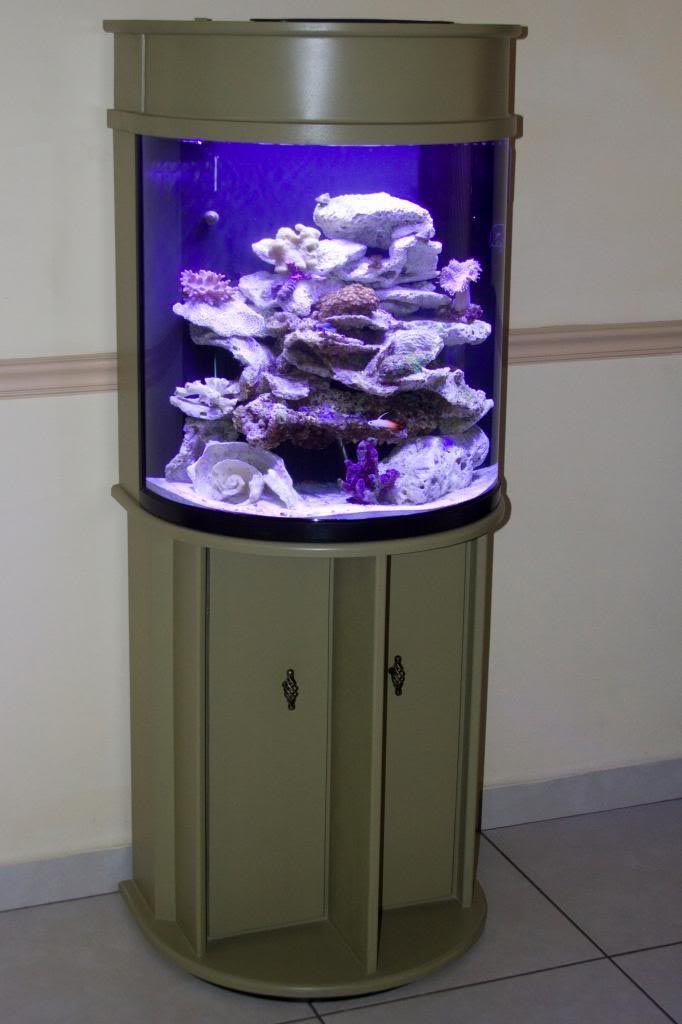 Half Moon Aquarium 30 Gallon 1000 Aquarium Ideas