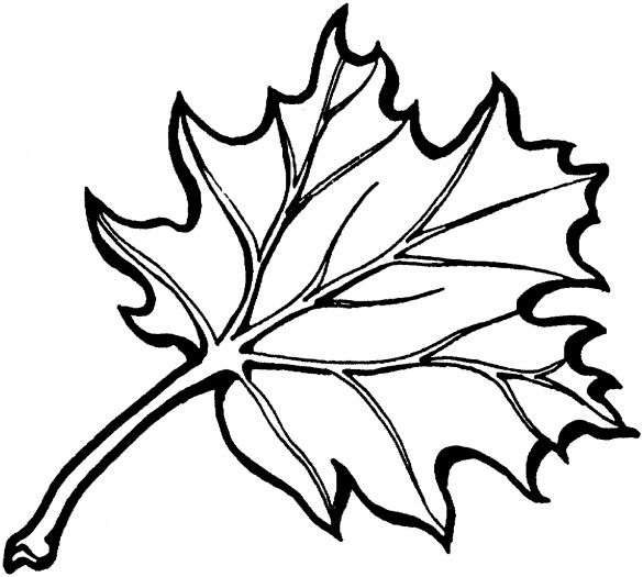 Eastern Black Oak Leaf Coloring Page Super Coloring Clipart