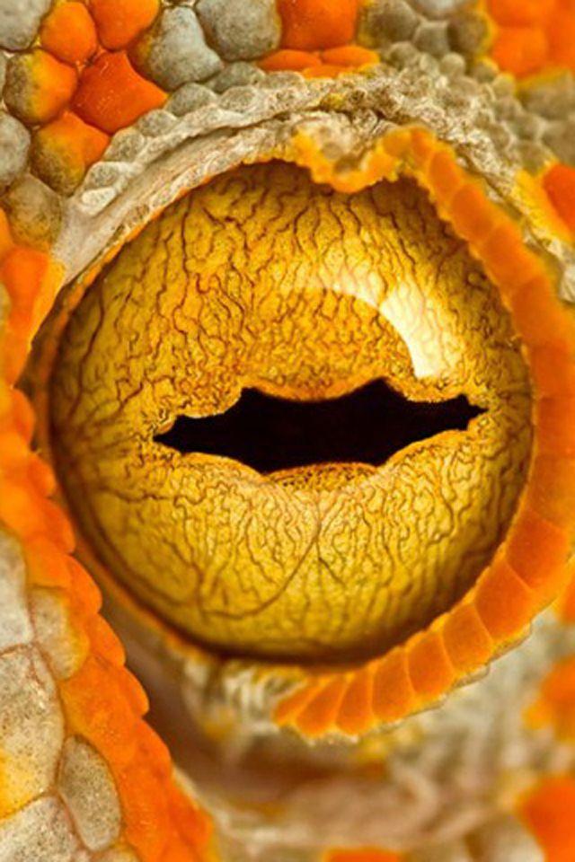 iguana eye painting - photo #29
