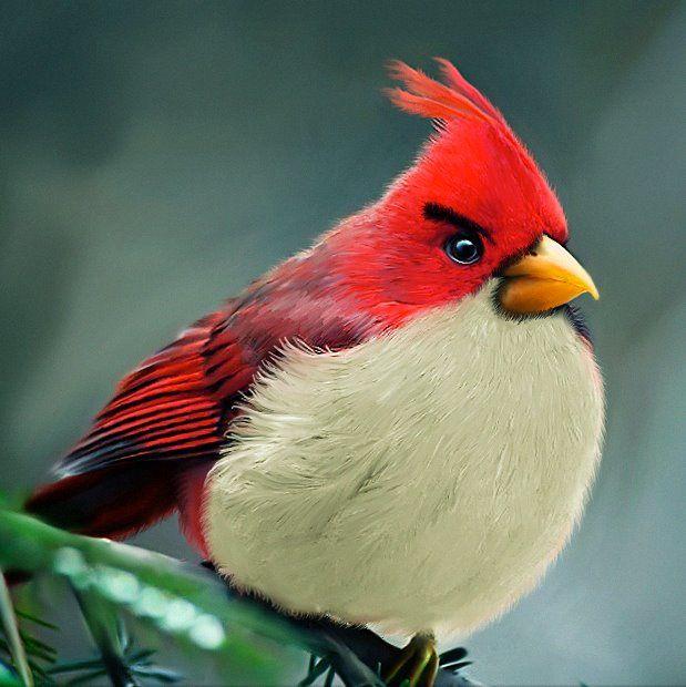 Angry Birds by Mohamed Raoof  http://mohamedraoof.deviantart.com/