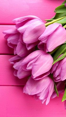 Tulip, 4k, HD wallpaper, spring, flower, pink (vertical