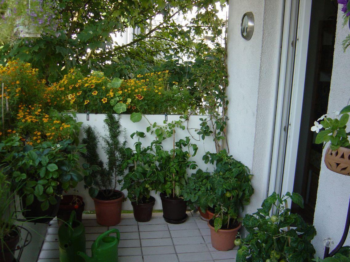 Tomatenpflanzen Balkon