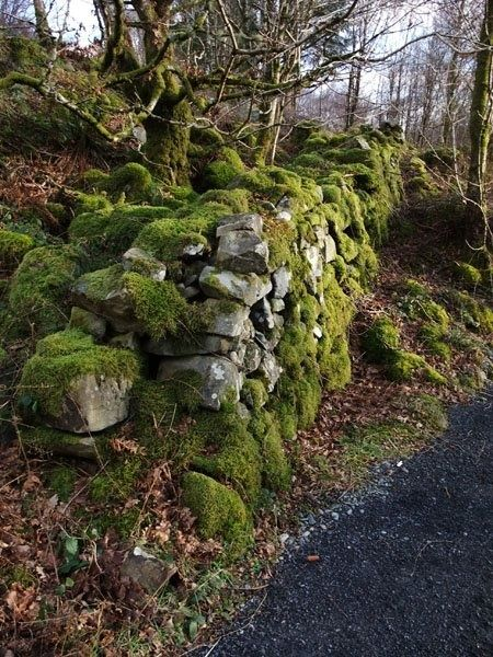 Coed y Brenin, Walesphoto via heathcliff