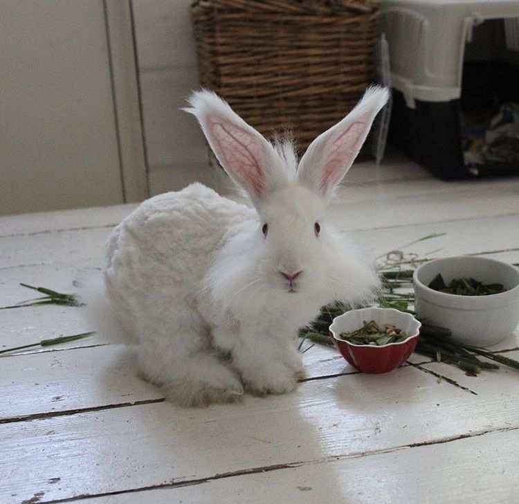 Pin by Gianna on BUNNIES Pet rabbit care, Pet rabbit