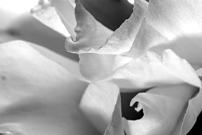 PhotoLove Fine Art Photography.  Fotografia Fine da Galeria PhotoLove.  @copyright PhotoLove / Mariana Fogaça www.galeriaphotolove.com.br
