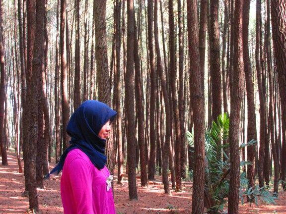 hutan pinus imogiri bantul hutanpinus explorejogja by vidyaayuu indonesiatraveling