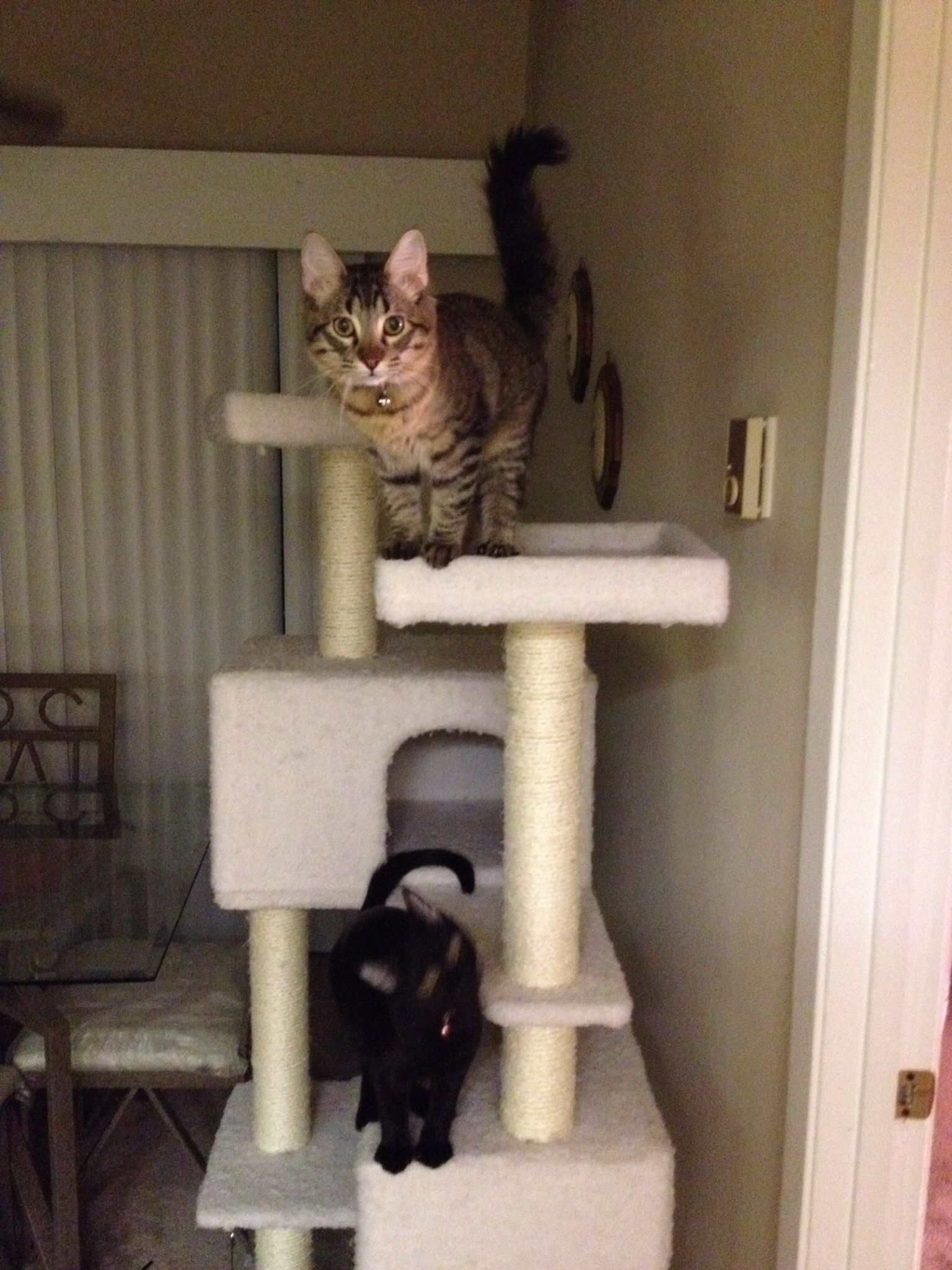 Both Of Them Playing On Their Cat Condo So Spoiled Cat Condo Kittens Tabby