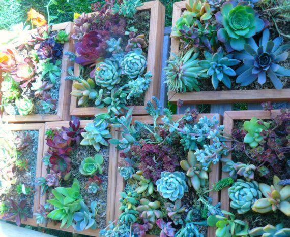 Custom Order For Carie Living Wall Art Kit Vertical Garden Frame Succulent Planter
