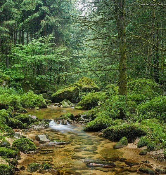 Stillensteinklamm, Austria w o o d s Pinterest Cascadas para